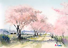 Cherry blossoms Watercolor sketch「桜」水彩スケッチ